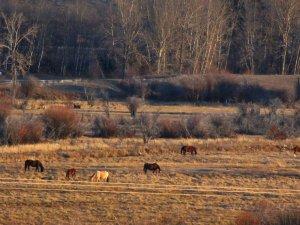 Montana 2013 097.jpg
