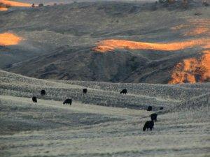 Montana 2013 117.jpg