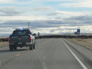 Montana 2013 141