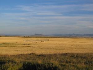Montana Move 040